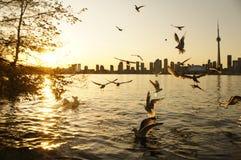 与日落的鸟 库存图片