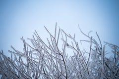 与早午餐的冬天背景在蓝色 免版税库存照片