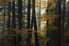 与早晨光的黑树在他们后 美丽的秋天col 库存照片