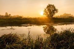 与早晨雾的童话风景 免版税库存图片