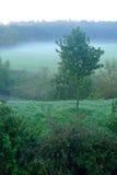 与早晨雾的绿色风景 免版税库存照片