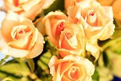 与早晨露水的五朵橙色玫瑰 库存图片