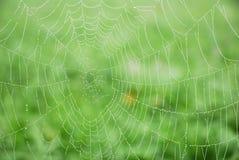 与早晨露水的蜘蛛网 免版税库存图片