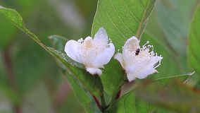 与昆虫的花在早晨老挝人PDR 影视素材