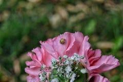 与昆虫的花桃红色 免版税库存照片