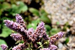 与昆虫的花 库存照片