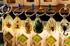 与昆虫的钥匙圈 免版税库存图片