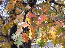 与明亮地色的叶子的秋天树 库存照片