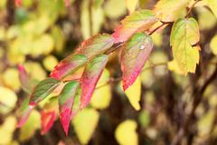 与明亮的叶子的美丽的秋天树 免版税库存图片