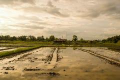 与明亮的天空的农业 免版税图库摄影