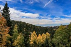 与明亮的天空的秋天颜色 库存图片