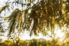 与明亮的树和阳光的美好的浪漫秋天 免版税图库摄影