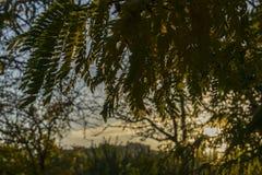 与明亮的树和阳光的美好的浪漫秋天 库存图片