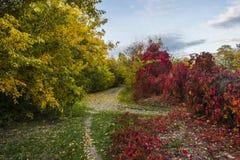 与明亮的树和阳光的美好的浪漫秋天 免版税库存图片