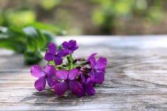 与明亮的桃红色的美丽的春天花-紫色开花在木背景的月经annua 平的位置,顶视图 空 库存图片