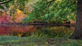 与明亮的灌木树和池塘的秋天五颜六色的风景 免版税图库摄影
