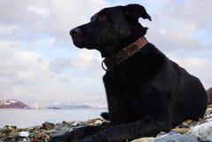 与明亮的眼睛的黑沉思的狗在俄罗斯的海海湾的背景 免版税库存照片