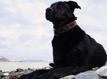 与明亮的眼睛的黑沉思的狗在海海湾的背景和与城市大厦的小山 俄国 免版税库存照片
