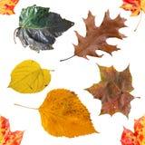 与明亮的秋叶的无缝的背景 库存照片