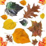 与明亮的秋叶的无缝的背景 免版税图库摄影