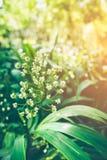 与明亮的阳光的特写镜头美丽的花 葡萄酒作用t 库存照片