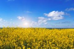 与明亮的黄色花的美好的风景领域 免版税库存图片