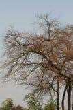 与昏暗的光的干树枝在夏天 免版税库存图片