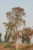 与昏暗的光的干树枝在夏天 库存照片