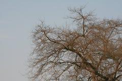 与昏暗的光的干树枝在夏天 免版税库存照片