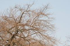 与昏暗的光的干树枝 免版税库存照片