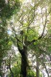 与星期日光的高大的树木 免版税库存图片