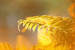 与星期日光芒的叶子 免版税图库摄影