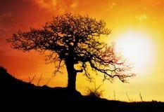 与星期日和颜色红色橙色天空的单独结构树 免版税库存图片