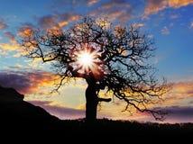 与星期日和颜色红色橙色天空的单独结构树 免版税库存照片
