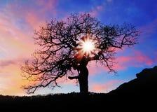 与星期日和颜色红色黄色天空的单独结构树 图库摄影