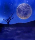 满月和树在沙漠 库存图片