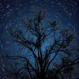 与星足迹的现出轮廓的树 库存图片