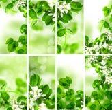 与春天叶子的抽象绿色墙纸背景 库存图片