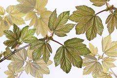 与春天叶子的构成 库存照片