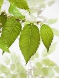 与春天叶子的构成 免版税库存照片