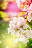 与春天开花的五颜六色的自然背景 免版税库存图片