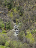 与春天树的山小河 库存照片