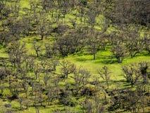 与春天树的山小河 库存图片