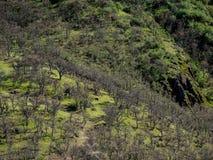 与春天树的山小河 免版税库存照片