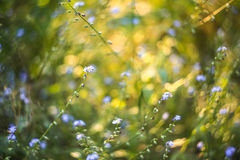 与春天的抽象明亮的被弄脏的与小蓝色花和植物的背景和夏天 美好的bokeh在阳光下 库存照片