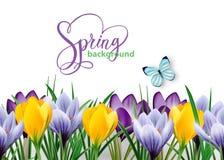 与春天的无缝的水平的边界开花番红花和蝴蝶 向量 向量例证