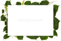 与春天的框架有菩提树树叶子的 免版税库存照片
