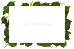 与春天的框架有菩提树树叶子的 免版税图库摄影