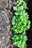 与春天绿色的种子自温室 图库摄影