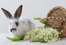与春天花的兔子 免版税库存图片